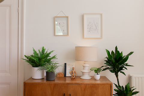 Tropical houseplants delivered right to your doorstep and into your living room