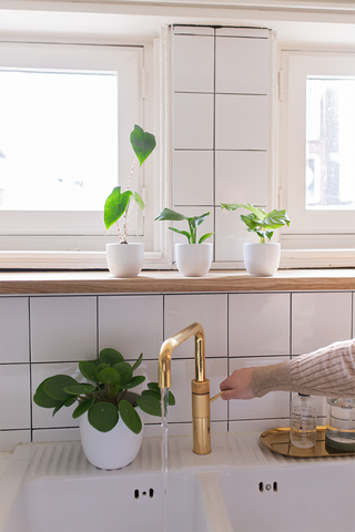 11 best houseplants for every corner in your kitchen