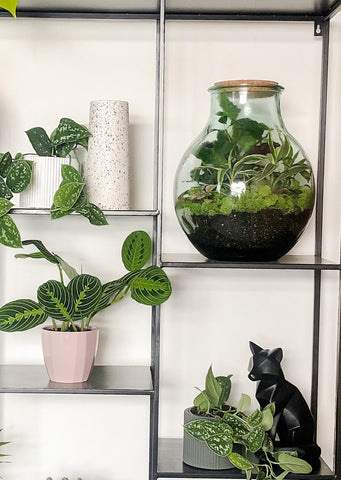 DIY Terrarium kit sitting on a shelf surrounded by other plants