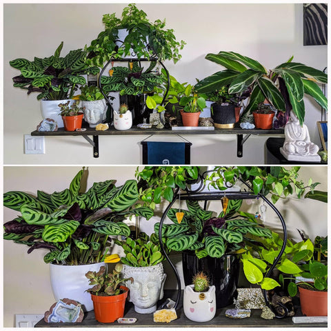 Plant collection on DIY shelf.