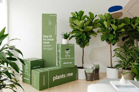 Plantsome boxes surrounded by indoor plants including a fiddle leaf fig.