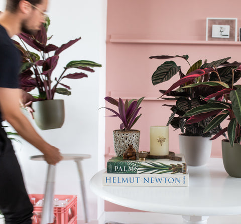 Man tends to his houseplants helping with self-care over the holidays