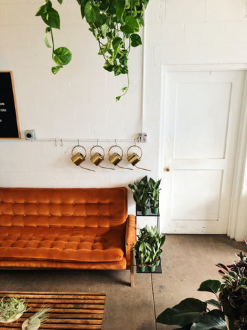 Interior decor shot - caring for your indoor plants, watering cans, trailing pothos