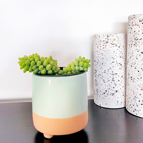 String of Burritos - Canada's houseplant delivery