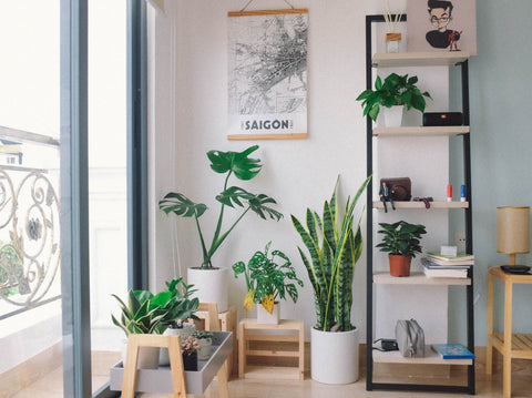 Tropical houseplant collection delivered right to your doorstep.