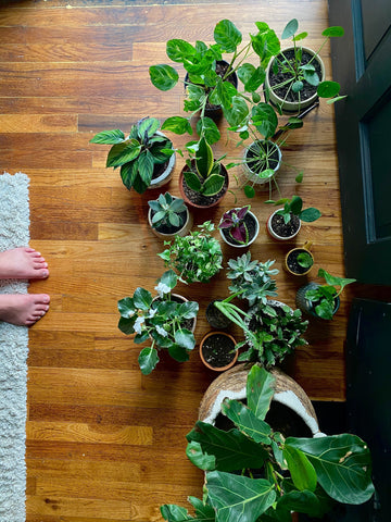 Prepping to repot indoor plants in spring.