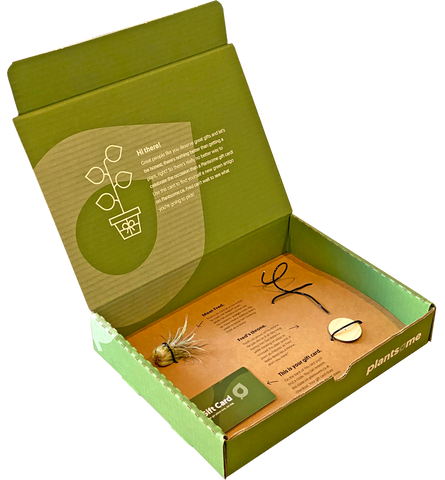 Gift Box with Gift Card, Air Plant, and Stand for the Air Plant
