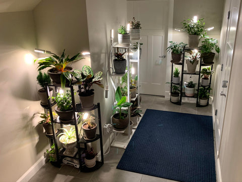 Collection of plants delivered from Plantsome.ca
