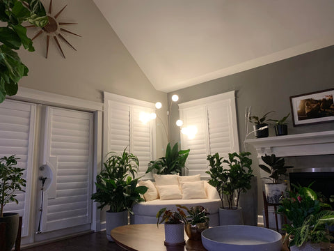 Living room full of plants delivered using plantsome.ca