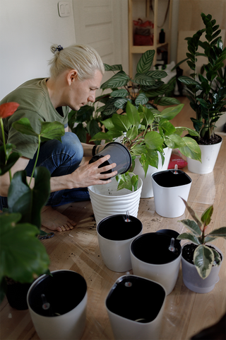 Choosing potting soil for your houseplants - soil delivery in Canada.