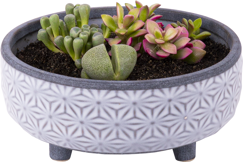Succulent bowl DIY kit
