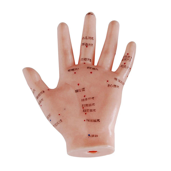 66fit Hand Acupuncture Model - 13cm | Hola Wellbeing