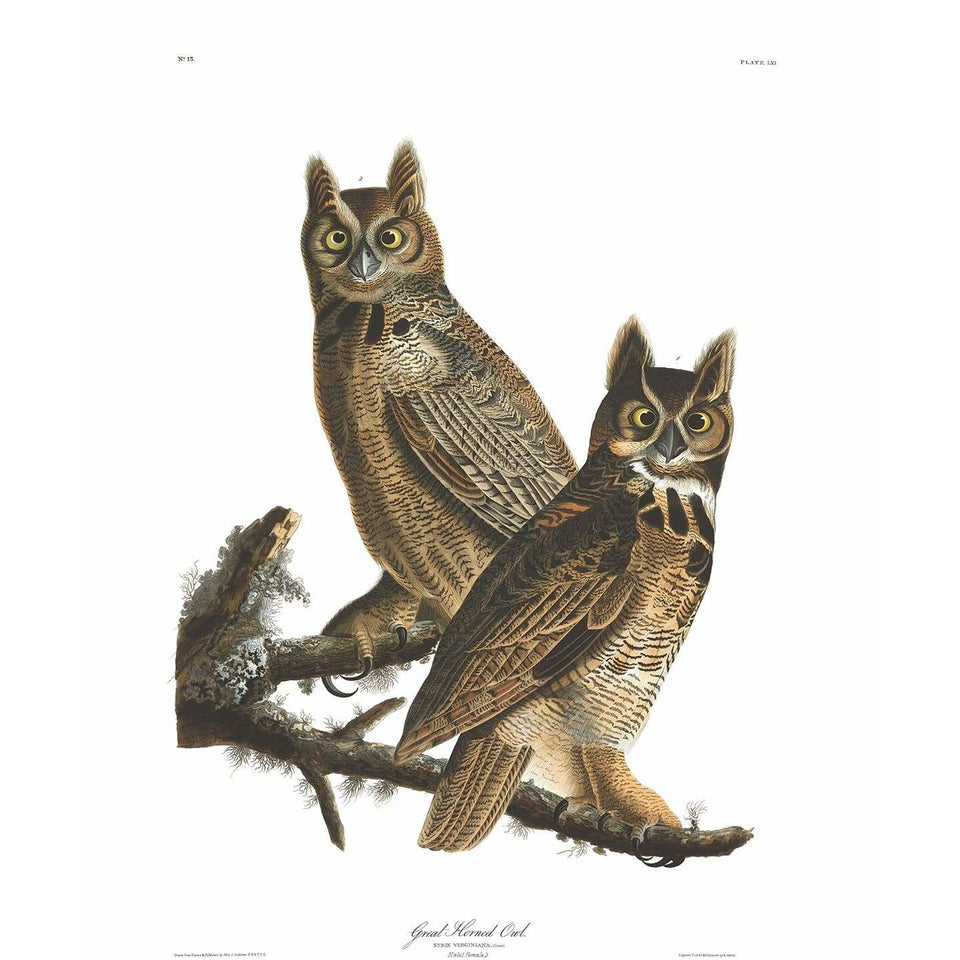 Akoestisch Paneel 'Great Horned Owl'