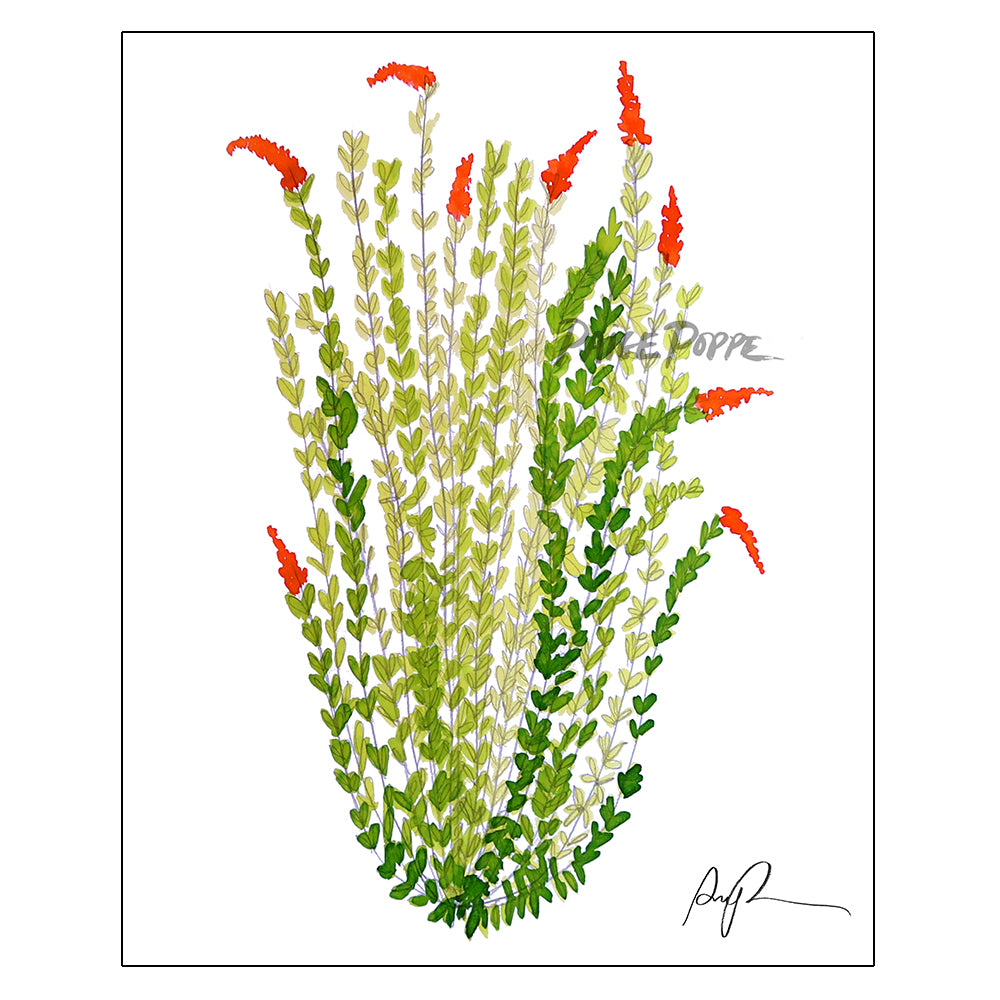 """Sketchbook Ocotillo"" Watercolor Art Print"