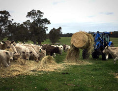Feeding livestock is fast and easy with a HaySpin Bale Spinner