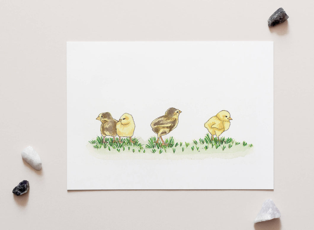 Baby Chickens Chicks - A4 Unframed Art Print