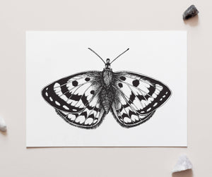 Spotty Moth Black & White - A4 Unframed Art Print