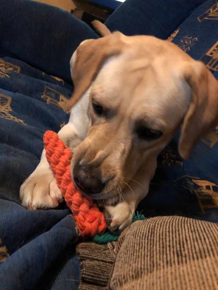 Carrot Chew Toy
