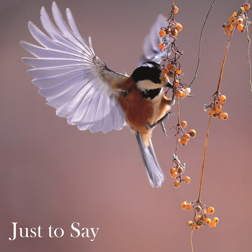 Just to say Bird