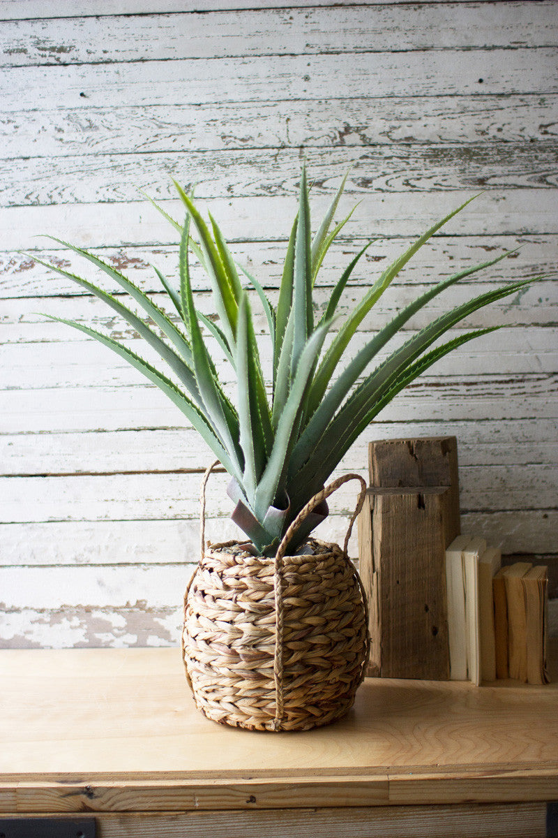 ARTIFICIAL ALOE IN A WOVEN SEAGRASS POT