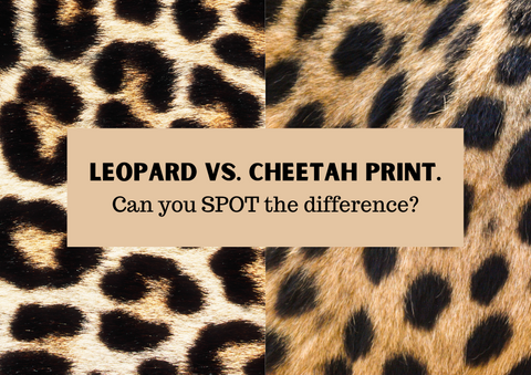 Leopard vs. cheetah print. Can you SPOT the difference?