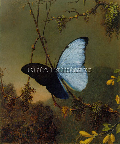 MARTIN JOHNSON HEADE BLUE MORPHO BUTTERFLY ATC ARTIST PAINTING REPRODUCTION OIL
