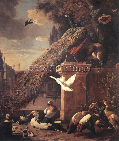 MELCHIOR DE HONDECOETER D PEACOCKS AND DUCKS ARTIST PAINTING HANDMADE OIL CANVAS