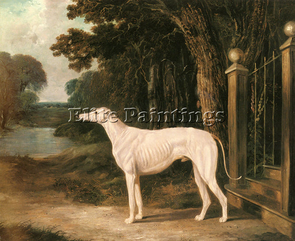 JOHN FREDERICK HERRING  VANDEAU A WHITE GREYHOUND ARTIST PAINTING REPRODUCTION