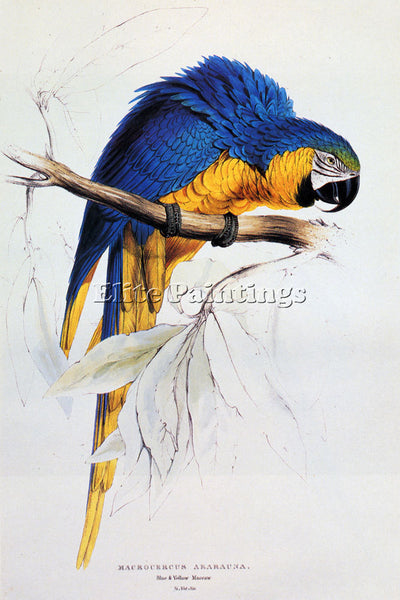 EDWARD LEAR BLUE AND YELLOW MACAW ARTIST PAINTING REPRODUCTION HANDMADE OIL DECO