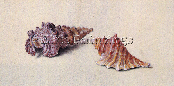 JOHN RUSKIN STUDY OF TWO SHELLS ARTIST PAINTING REPRODUCTION HANDMADE OIL CANVAS