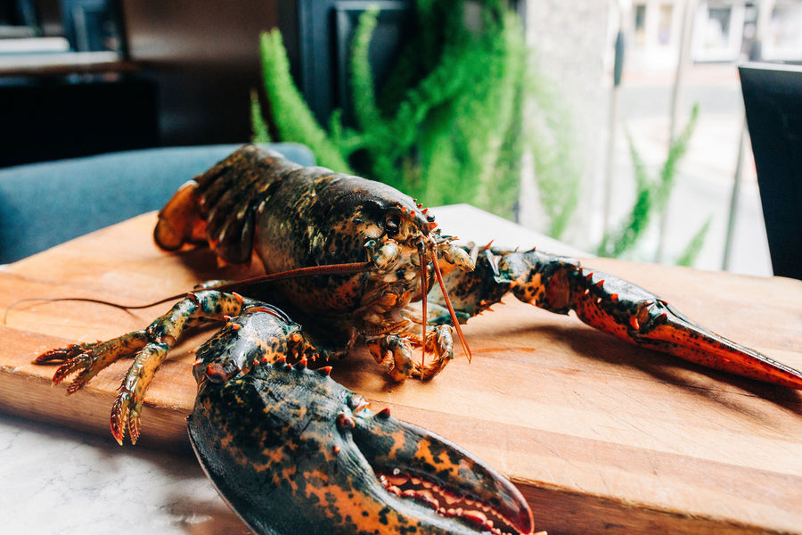 Live Newfoundland Lobster - SOLD OUT! Check back in Spring of 2021.