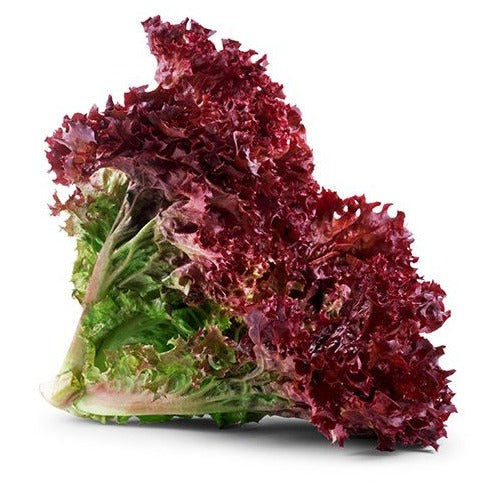 Red Lolo Rosso Lettuce (100g)