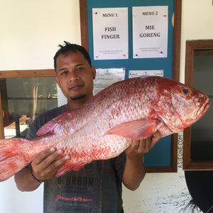 Catch Of The Day - Daily Changing - Contact Us!