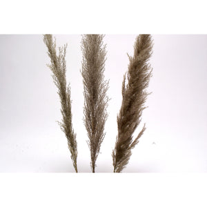 "Grey Pampas Grass 48"" ***Pick up only"