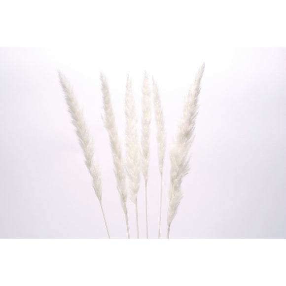 Mini Pampas White