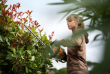 Image shows the HSA 56 Hedge Trimmer being used by a lady wearing protective googles, trimming a hedge