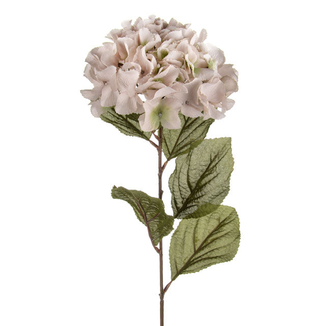 Blush Cream Hydrangea Flower