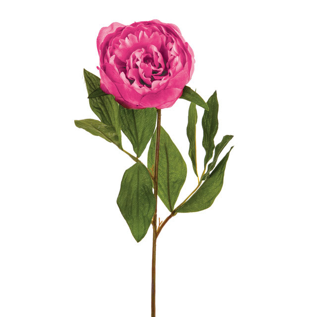 Light Pink Single Stem Peony