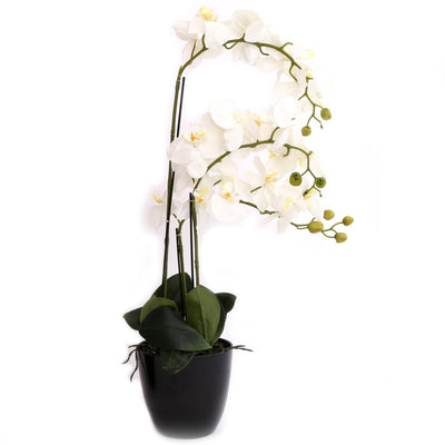 Large White Orchid in Black Pot
