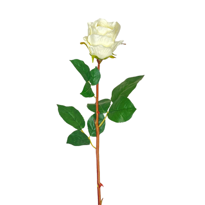Buds White Rose Stem