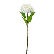 Large Smooth Edge White Hydrangea