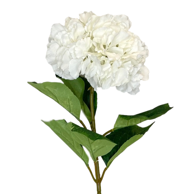 Large Soft Edge White Hydrangea