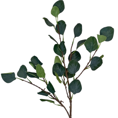 Eucalyptus Single Stem