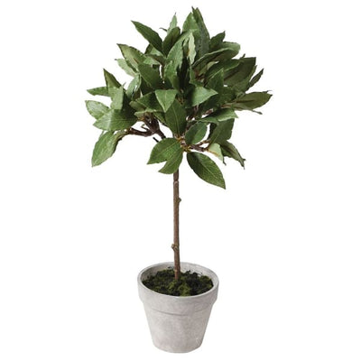 Small Grey Pot With Bay Tree