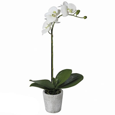 Single Orchid Spray in Pot