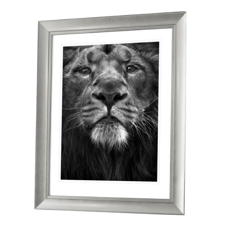 Lion Face Framed Artwork