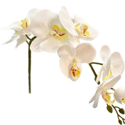 Orchid White Stem