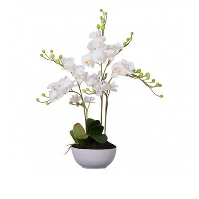 White Orchid Plant with White Ceramic Pot