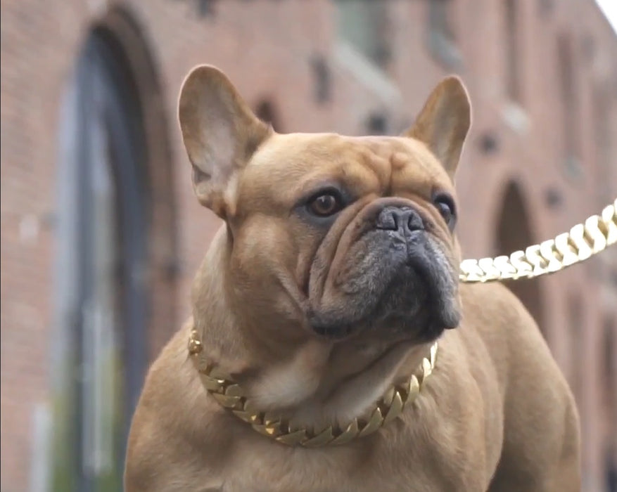 Doggy Bling