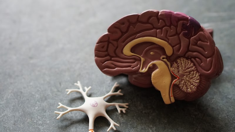 CBD & Memory: New Research Shows CBD Increases Blood Flow to Brain's Hippocampus